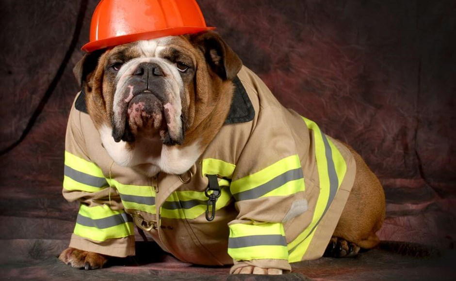 Stop Drop and Roll on National Pet Fire Safety Day