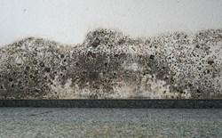 A Spotlight on Mold Remediation