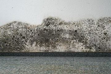 A Spotlight on Mold Remediation