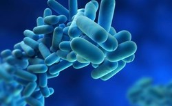 Legionella: The Killer In Your Tap!