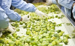 Are disposable gloves required for food handling and processing?
