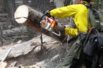 Chainsaw Safety 101