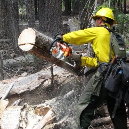 Chainsaw Safety 101