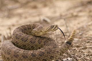Rattlesnakes and Other Workplace Hazards
