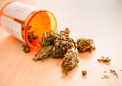Key Safety Concerns Around Marijuana In The Workplace