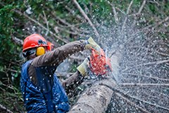 Chainsaw operator at work