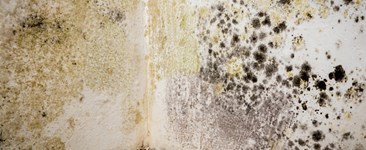Mold remediation safety