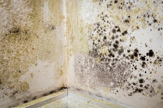 7 Safety Tips for Mold Cleanup and Remediation Tasks