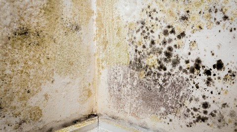 Mold poses a serious risk to workers and their families. Follow these steps to keep mold remediation and cleanup workers safe.