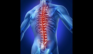 Image for Minimizing Back Pain for Cubicle Workers